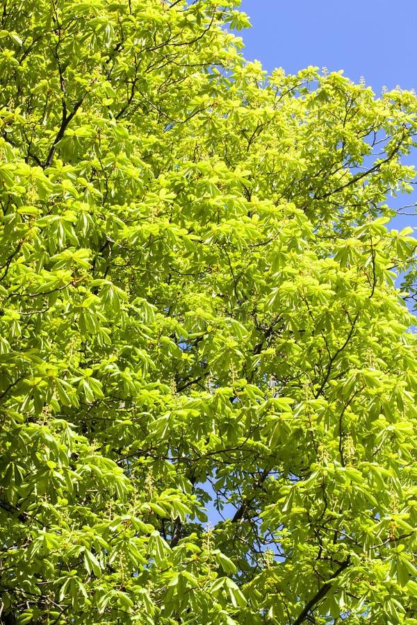 fogliame dell'albero fotografie stock libere da diritti