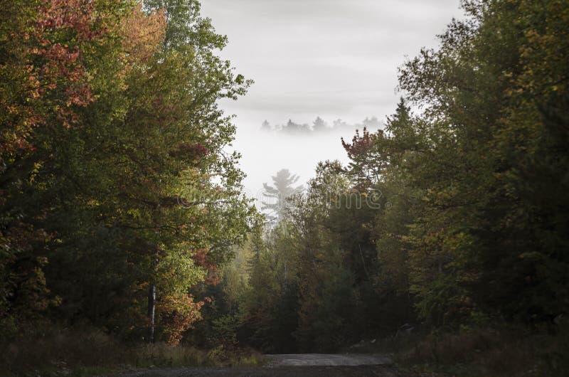 Fogliame della nebbia della collina della strada non asfaltata immagini stock libere da diritti