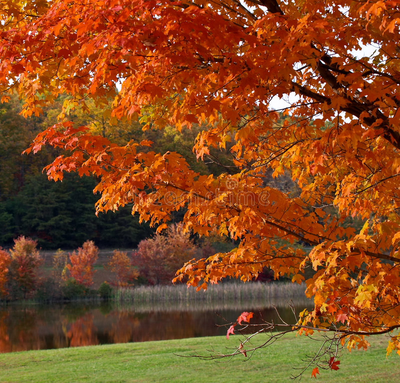 Download Fogliame di autunno immagine stock. Immagine di colorful - 204027