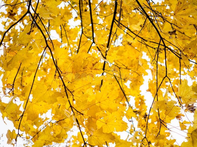 Fogliame di autunno all'autunno fotografie stock