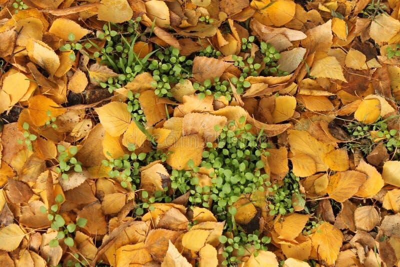 Fogliame di autunno come fondo fotografia stock