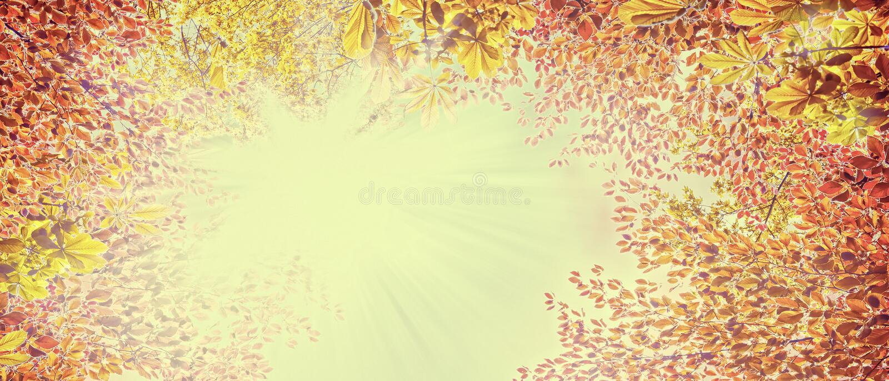Fogliame di autunno sul cielo soleggiato, fondo astratto della natura, insegna per il sito Web immagini stock libere da diritti