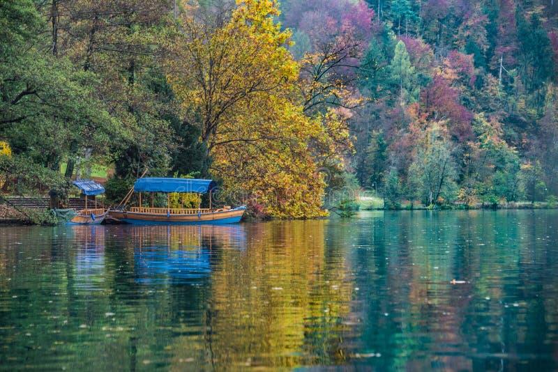 Fogliame di autunno sul lago sanguinato immagine stock libera da diritti