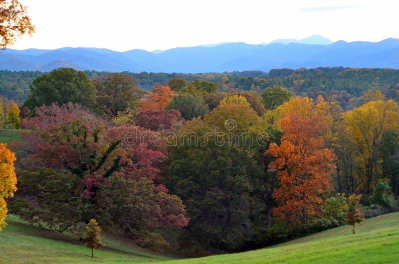 Fogliame di caduta ai giardini della proprietà di Biltmore, Asheville NC fotografia stock libera da diritti