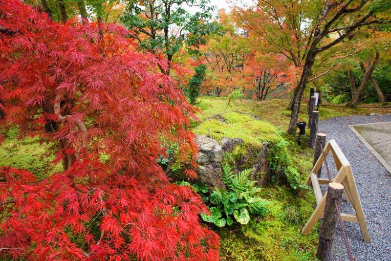 Fogliame di caduta al tempio di Eikando, Kyoto fotografie stock