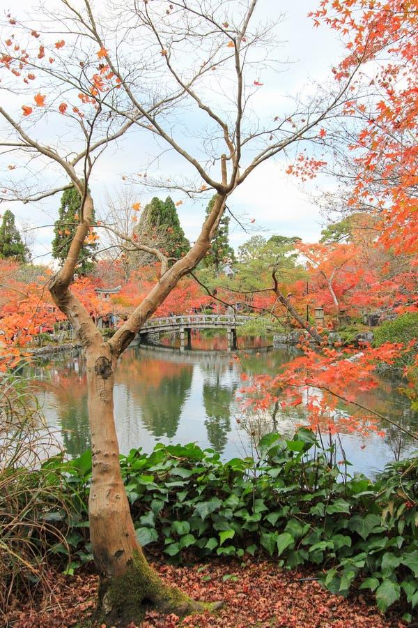 Fogliame di caduta al tempio di Eikando, Sakyo-ku, Kyoto, Giappone immagini stock