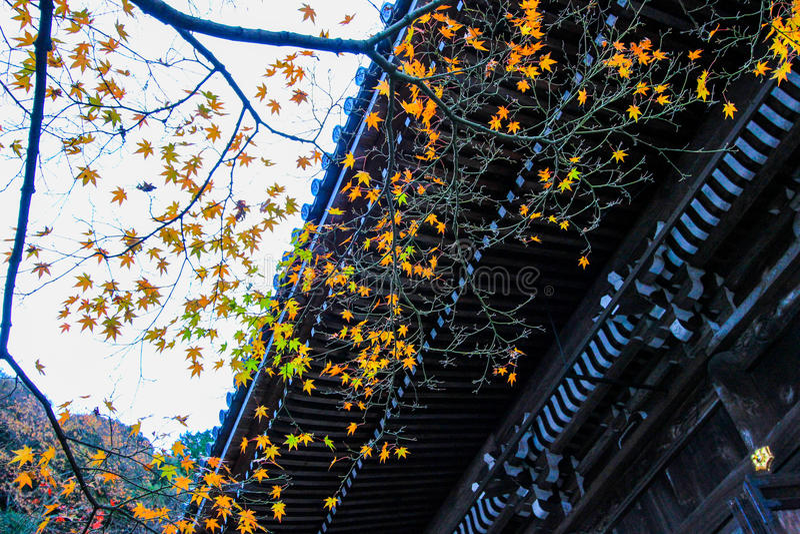 Fogliame di caduta al tempio di Eikando, Sakyo-ku, Kyoto, Giappone fotografia stock