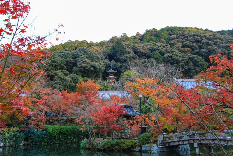 Fogliame di caduta al tempio di Eikando, Sakyo-ku, Kyoto, Giappone immagine stock