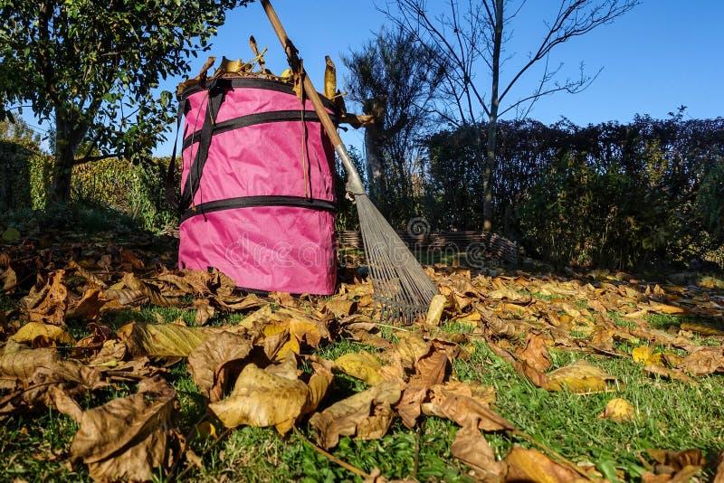 Fogliame di caduta che fa il giardinaggio, rastrellando le foglie fotografia stock