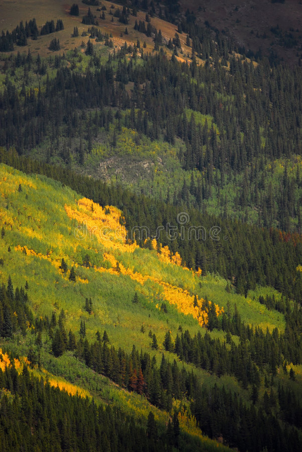Fogliame di caduta del Colorado immagine stock libera da diritti