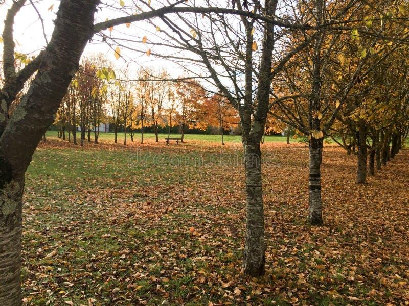 Fogliame di caduta naturale del paesaggio di autunno delle foglie cadenti nel parco immagine stock libera da diritti