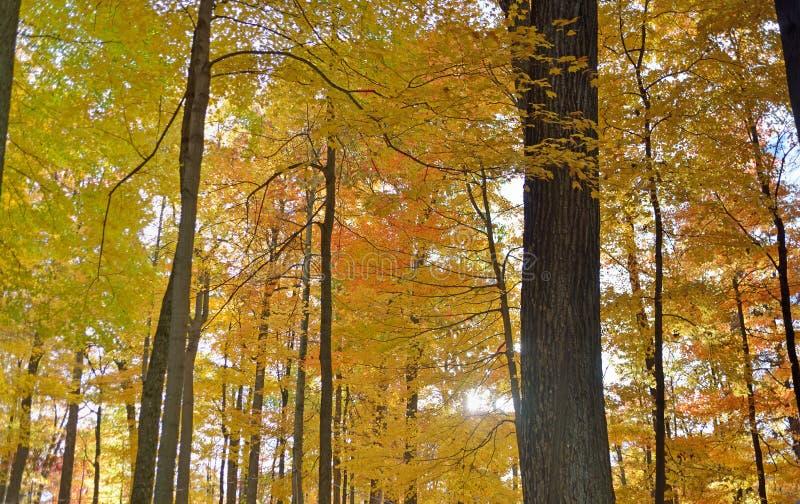 Fogliame di caduta nella foresta la Virginia dell'Ovest della roccia del bottaio immagine stock