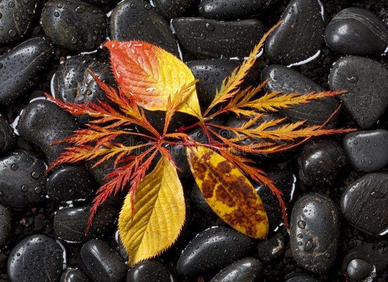 Fogliame di caduta sulle rocce nere fotografia stock