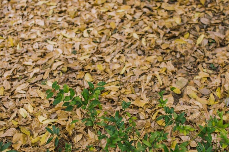 Fogliame e foglie verdi appassiti fotografie stock