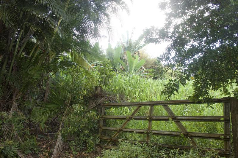 Fogliame fertile lungo la strada a Hana in Maui, Hawai immagini stock