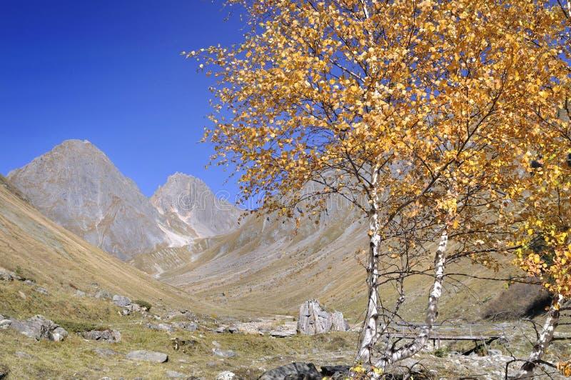 Fogliame giallo degli alberi in valle alpina fotografia stock