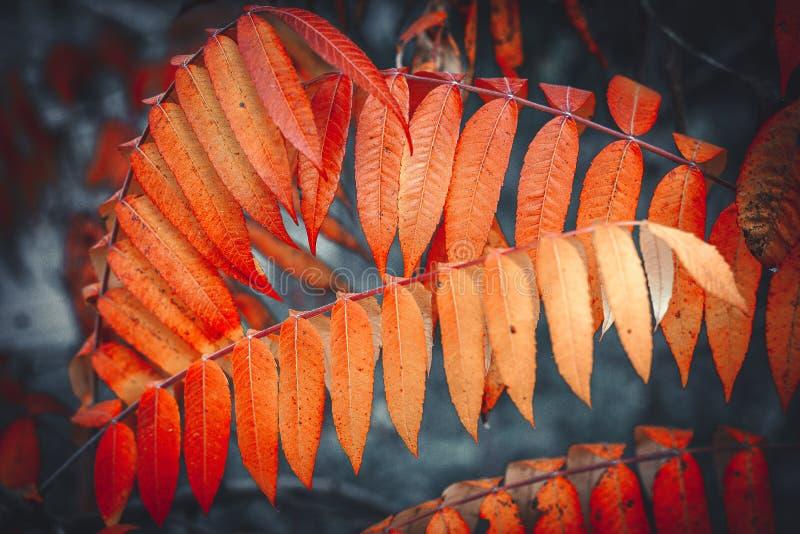 Fogliame giallo di autunno Carta da parati di autunno Fondo fotografia stock