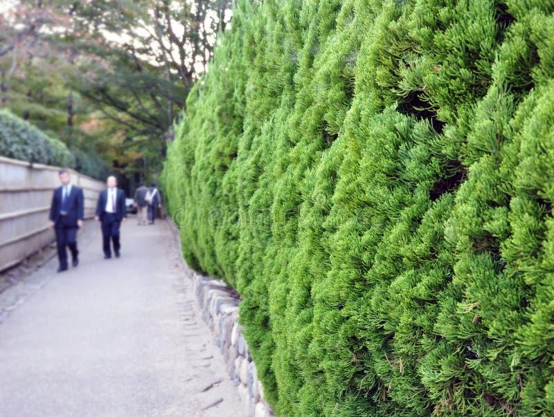 Fogliame sempreverde in giardino giapponese fotografia - Sempreverde da giardino ...