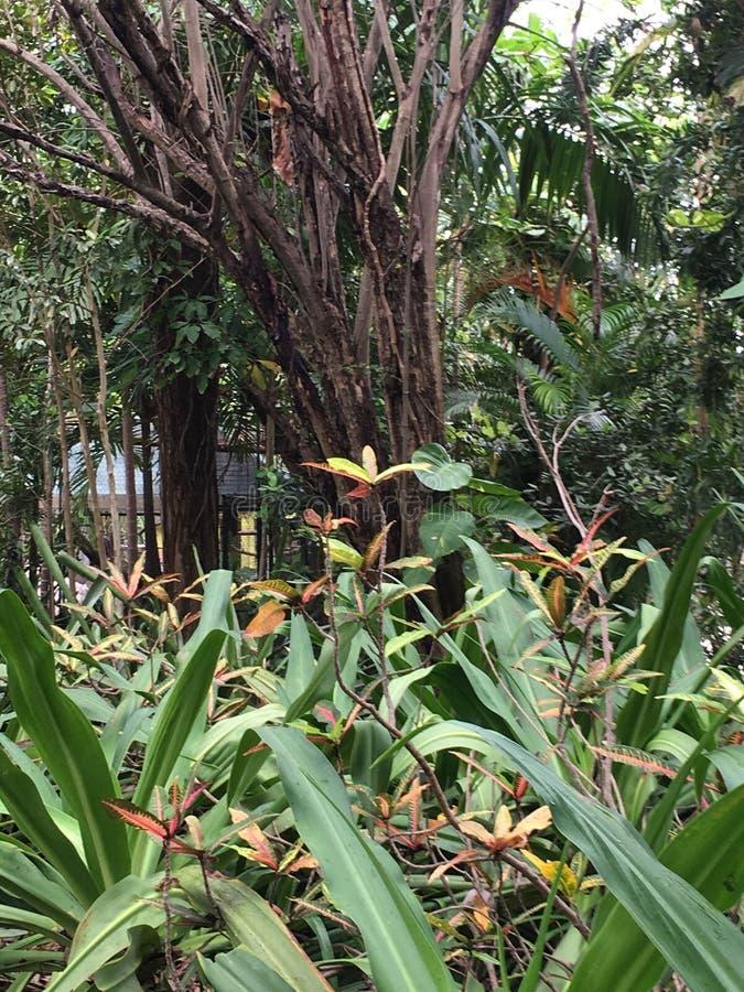 fogliame tropicale immagini stock libere da diritti