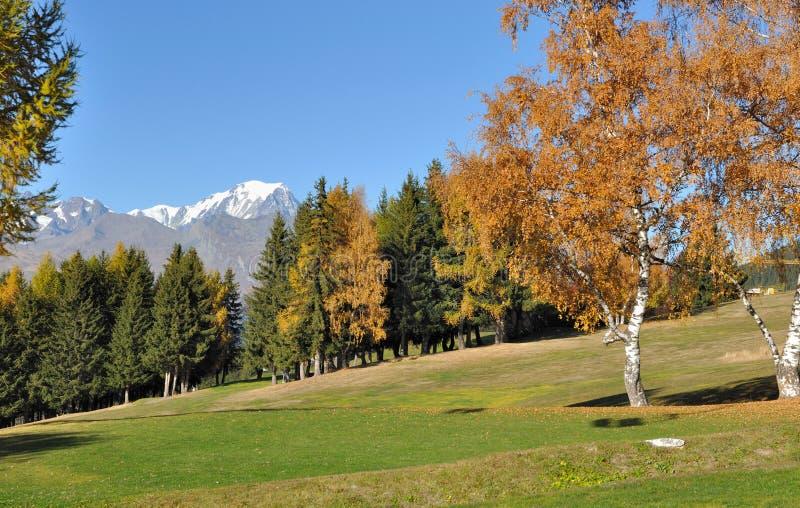 Fogliame variopinto degli alberi in un campo da golf immagini stock libere da diritti