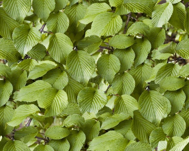 foglie arkivfoto