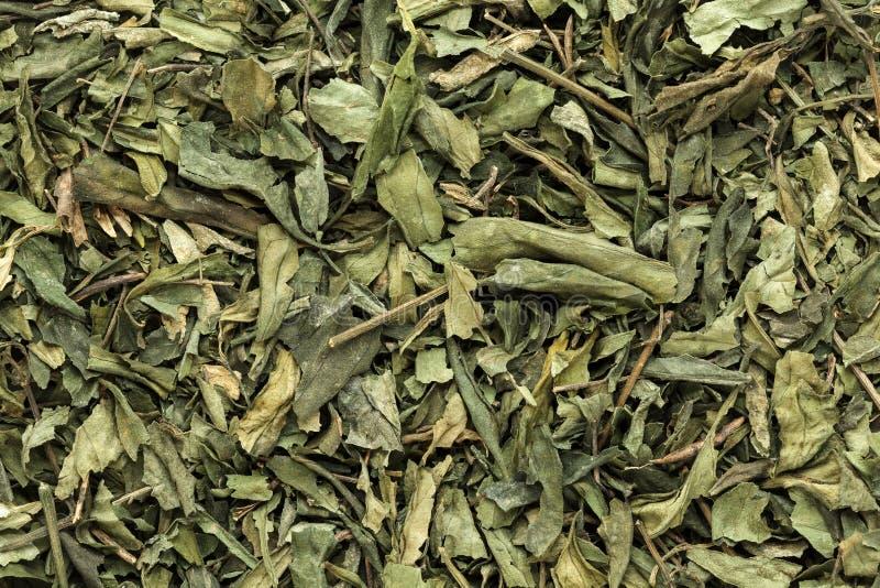 Foglie asciutte organiche di chiretta o di Kalmegh (paniculata di Andrographis) fotografia stock
