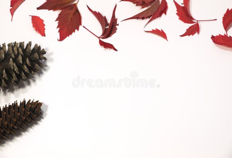 Foglie autunnali rosse e marroni con i coni su fondo bianco Disposizione piana Vista superiore fotografia stock
