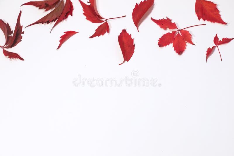 Foglie autunnali rosse e marroni su fondo bianco Disposizione piana Vista superiore fotografia stock