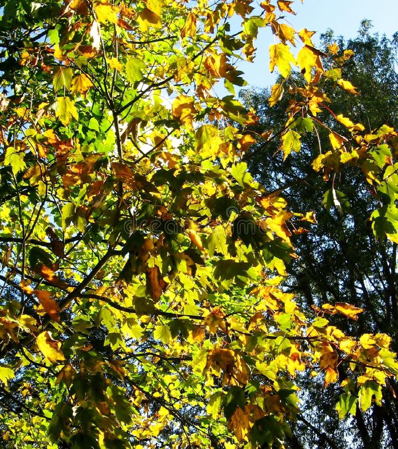 Foglie in autunno fotografia stock