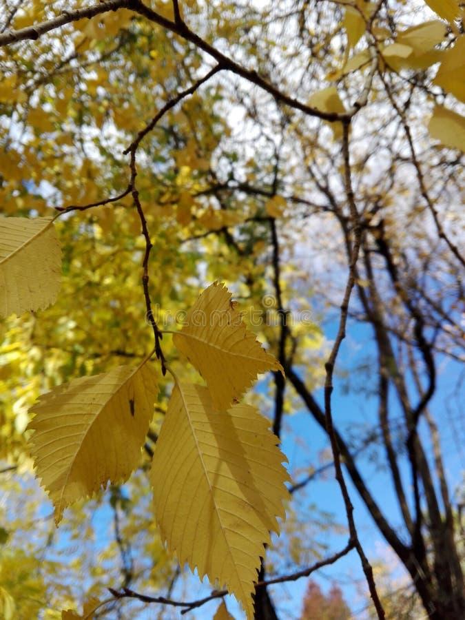 Foglie in autunno fotografia stock libera da diritti