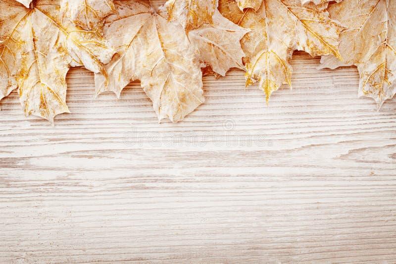 Foglie bianche del fondo di legno, Autumn Wooden Grain Board Texture fotografia stock libera da diritti