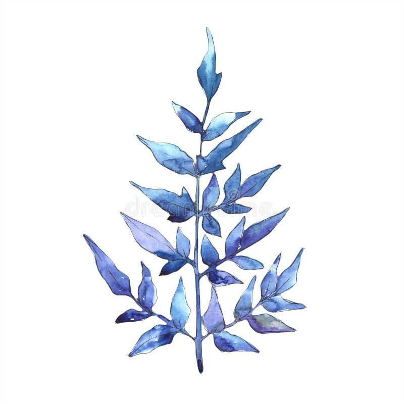 Foglie blu della felce Fogliame floreale del giardino botanico della pianta del freno della foglia Elemento isolato dell'illustra illustrazione di stock