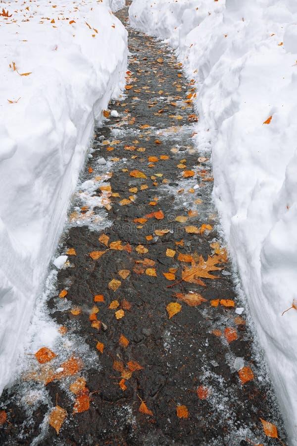 Foglie cadute dell'arancia coperte di neve che si trova sul sentiero per pedoni immagine stock libera da diritti