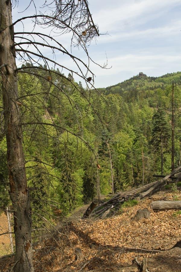 Foglie cadute ed alberi verdi fotografie stock