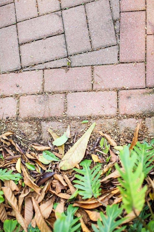 Foglie cadute giallo e foglie verdi di vita sul marciapiede pavimentato con il punto di vista di Gray Concrete Paving Stones Top fotografia stock