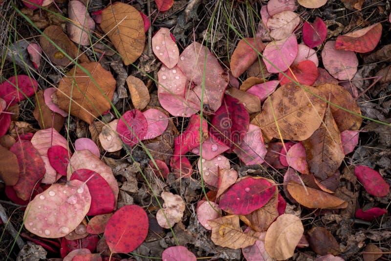 Foglie cadute multicolori sull'erba con le gocce di rugiada immagine stock libera da diritti