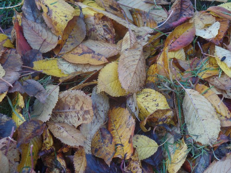 Foglie cadute su erba in autunno immagini stock libere da diritti