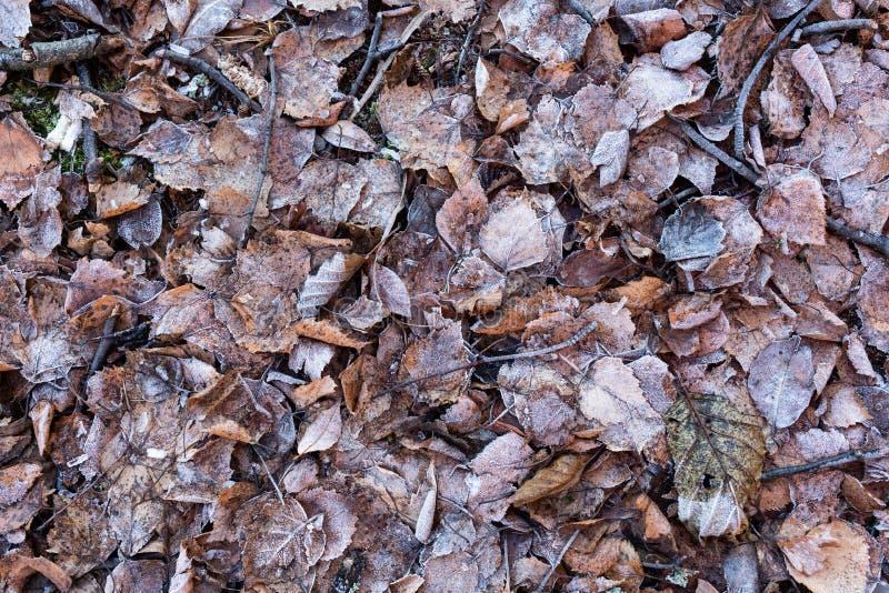 Foglie cadute su terreno coperto nella brina del gelo fotografia stock libera da diritti