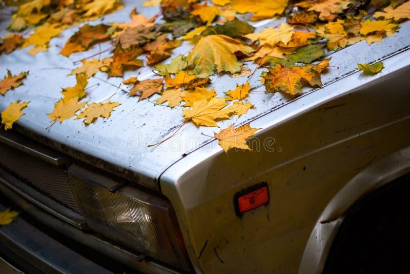 Foglie d'acero cadute su un cofano di auto battuto di vecchia data - chiusura di fondo autunnale con messa a fuoco selettiva immagine stock