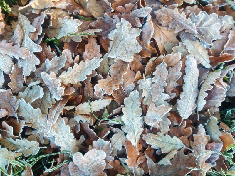 Foglie d'autunno fotografia stock