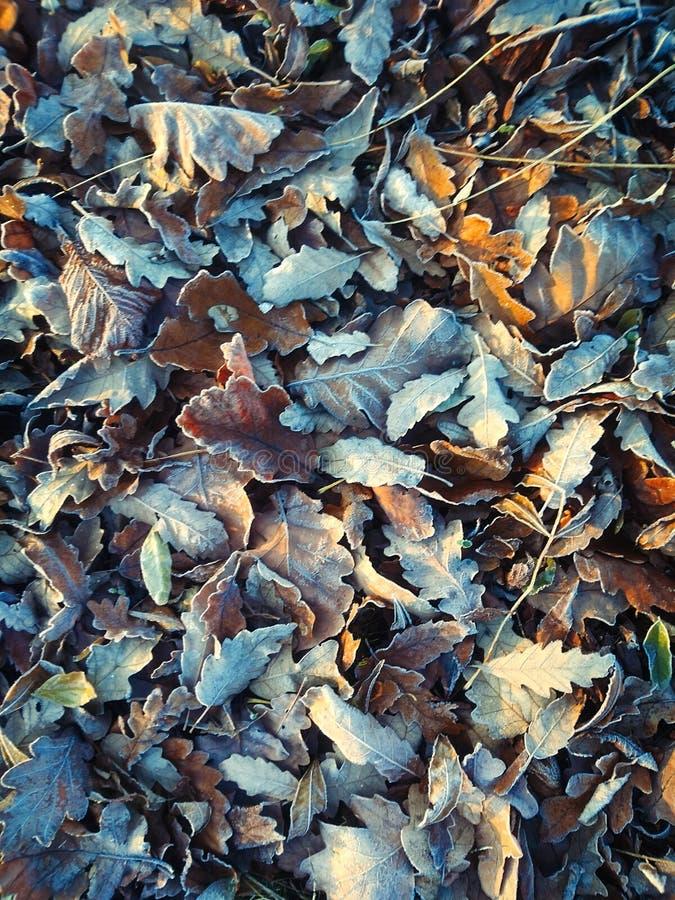 Foglie d'autunno fotografie stock libere da diritti