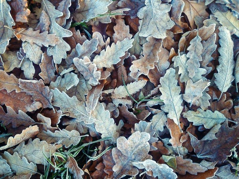 Foglie d'autunno immagine stock