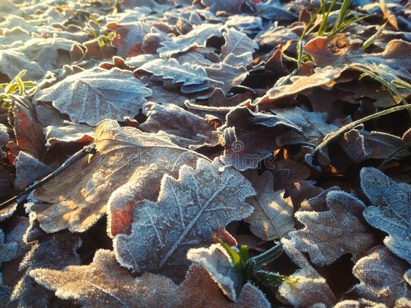 Foglie d'autunno fotografie stock