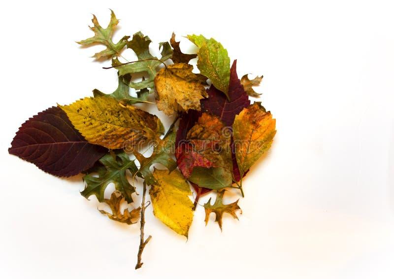 Foglie d'autunno fotografia stock libera da diritti