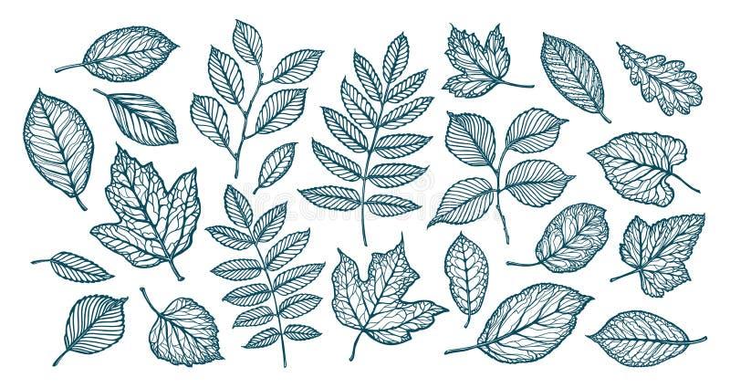 Foglie decorative dell'albero Natura, concetto della foresta Insieme degli elementi Illustrazione di vettore di schizzo illustrazione vettoriale