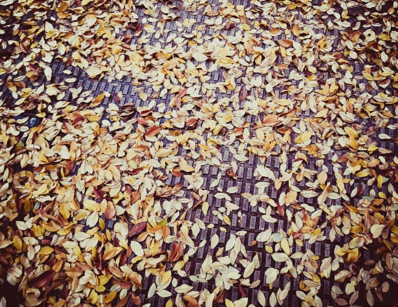 Foglie degli alberi caduti in autunno alla terra fotografia stock