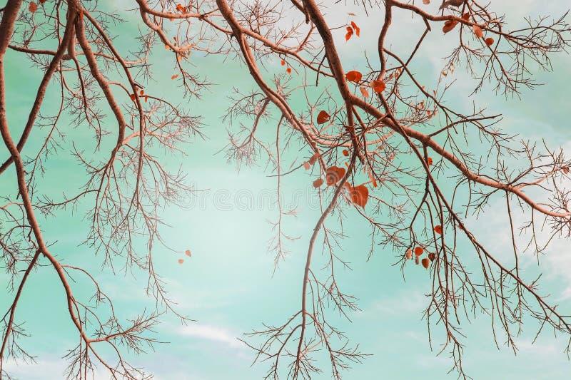 Foglie degli alberi di autunno nel colore d'annata fotografia stock