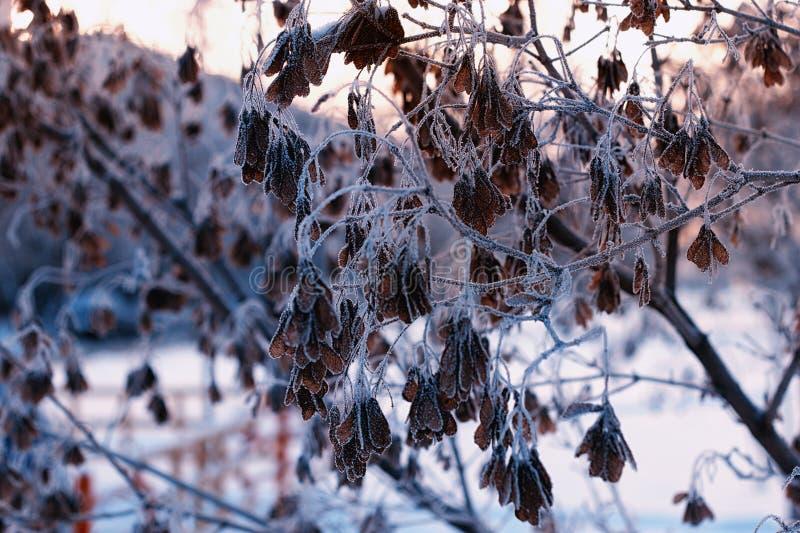 Foglie del gelo del sole fotografie stock libere da diritti