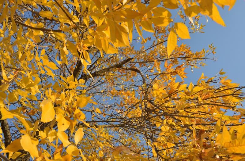 Foglie dell'albero in autunno fotografia stock libera da diritti