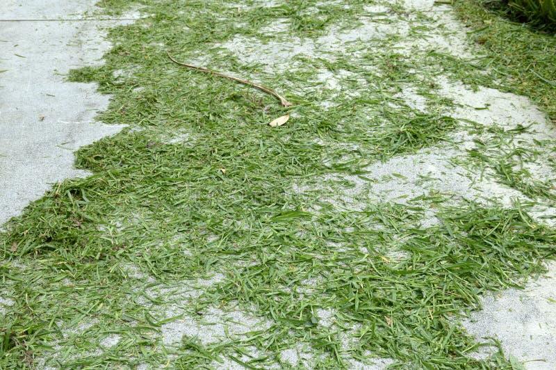 Foglie dell'erba sul pavimento del cemento immagine stock